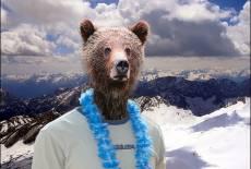 Der Seebär