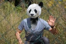 lausitzDADDY - der Live-Panda