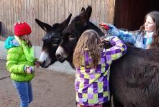 Deine Geburtstagsparty in Schloss & Zoo Hoyerswerda!