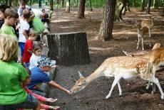 Tierpark Finsterwalde: Großes Tierparkfest am 5.8.