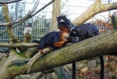 Affen-Zoo Jocksdorf e.V.