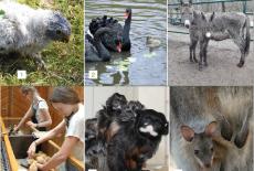 Zoo- & Tierbabys: Einfach süüüß!