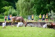 eG Wohnen Charity-Lauf am 6. Juli: Sport & Tierliebe