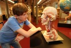 Die Anatomieausstellung im PLASTINARIUM Guben