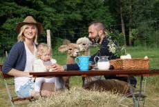 Wiesenpicknick mit Alpakas und Bio-Eis