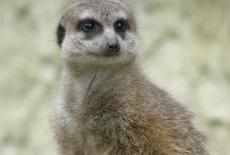Tier- und Artenschutz hautnah erleben