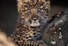 Kleine Leopardenlady freut sich auf Besucher