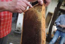 Nachwuchs-Imker und Bienenfreunde aufgepasst!