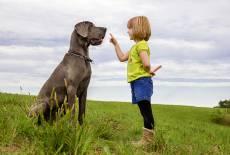 Der beste Freund fürs Kind
