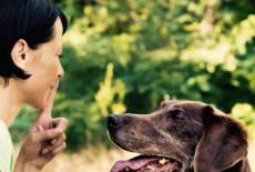 """""""Hunde lieben eine Hierarchie"""""""