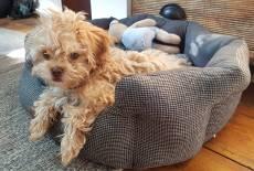 Der Hundekauf, der richtige Name und die Hunde-Versicherung