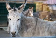 Kleiner Tierpark – großes Streichelvergnügen
